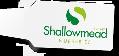 Shallowmead